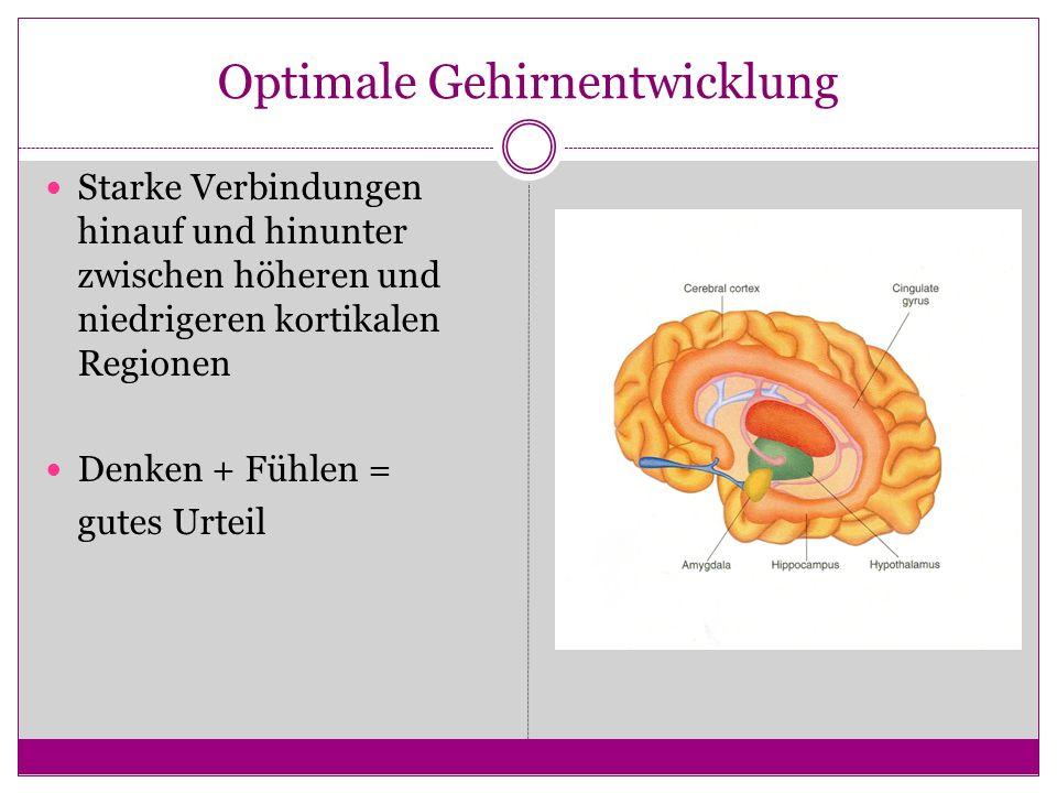 Optimale Gehirnentwicklung