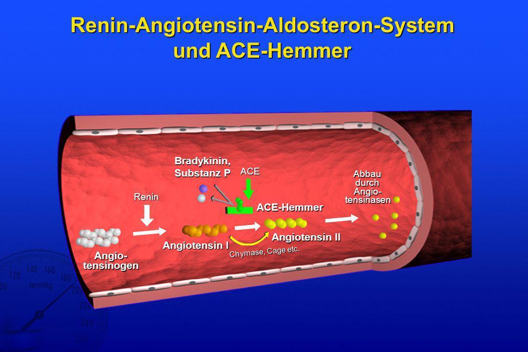 Renin-Angiotensin-Aldosteron-System und ACE-Hemmer