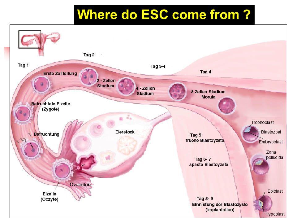 Where do ESC come from 43