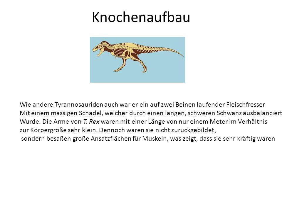 Knochenaufbau Wie andere Tyrannosauriden auch war er ein auf zwei Beinen laufender Fleischfresser.