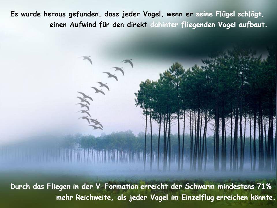 Es wurde heraus gefunden, dass jeder Vogel, wenn er seine Flügel schlägt,