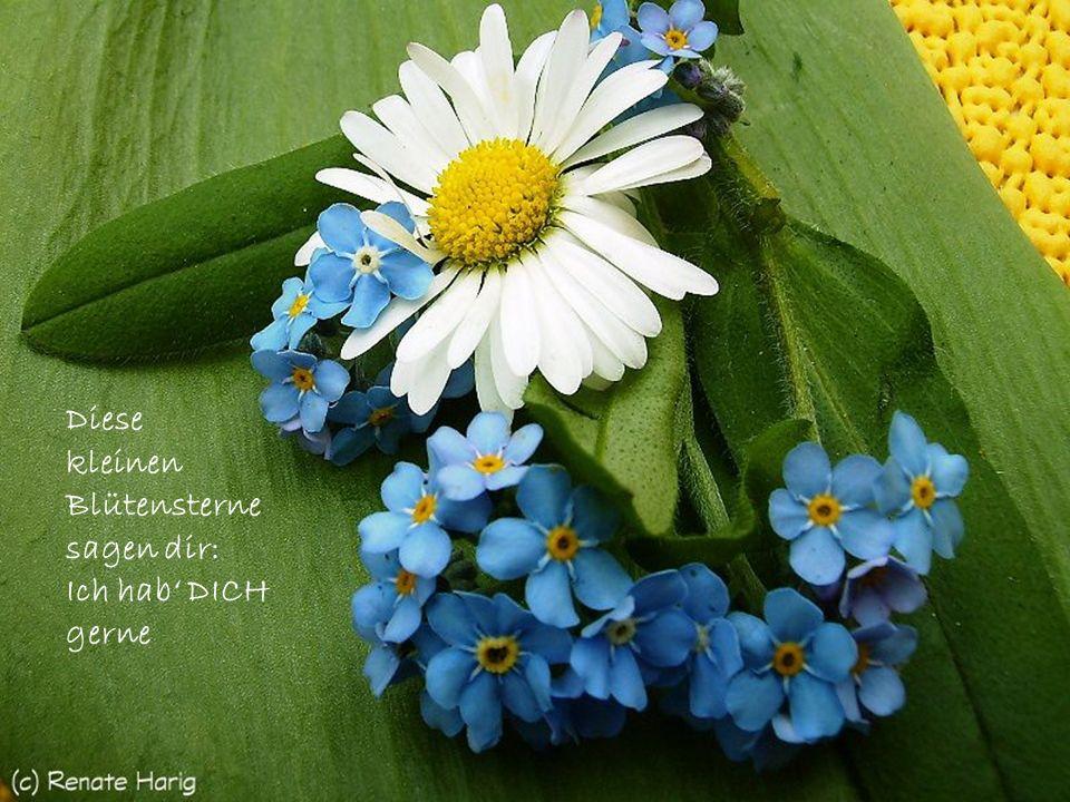 Diese kleinen Blütensterne sagen dir: Ich hab' DICH gerne