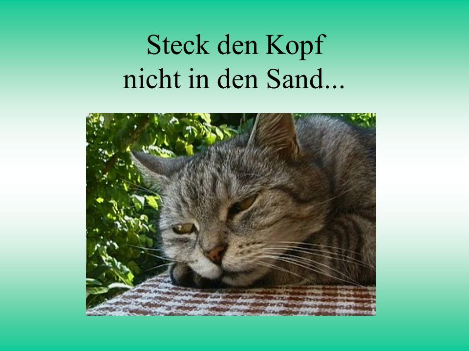 Steck den Kopf nicht in den Sand...