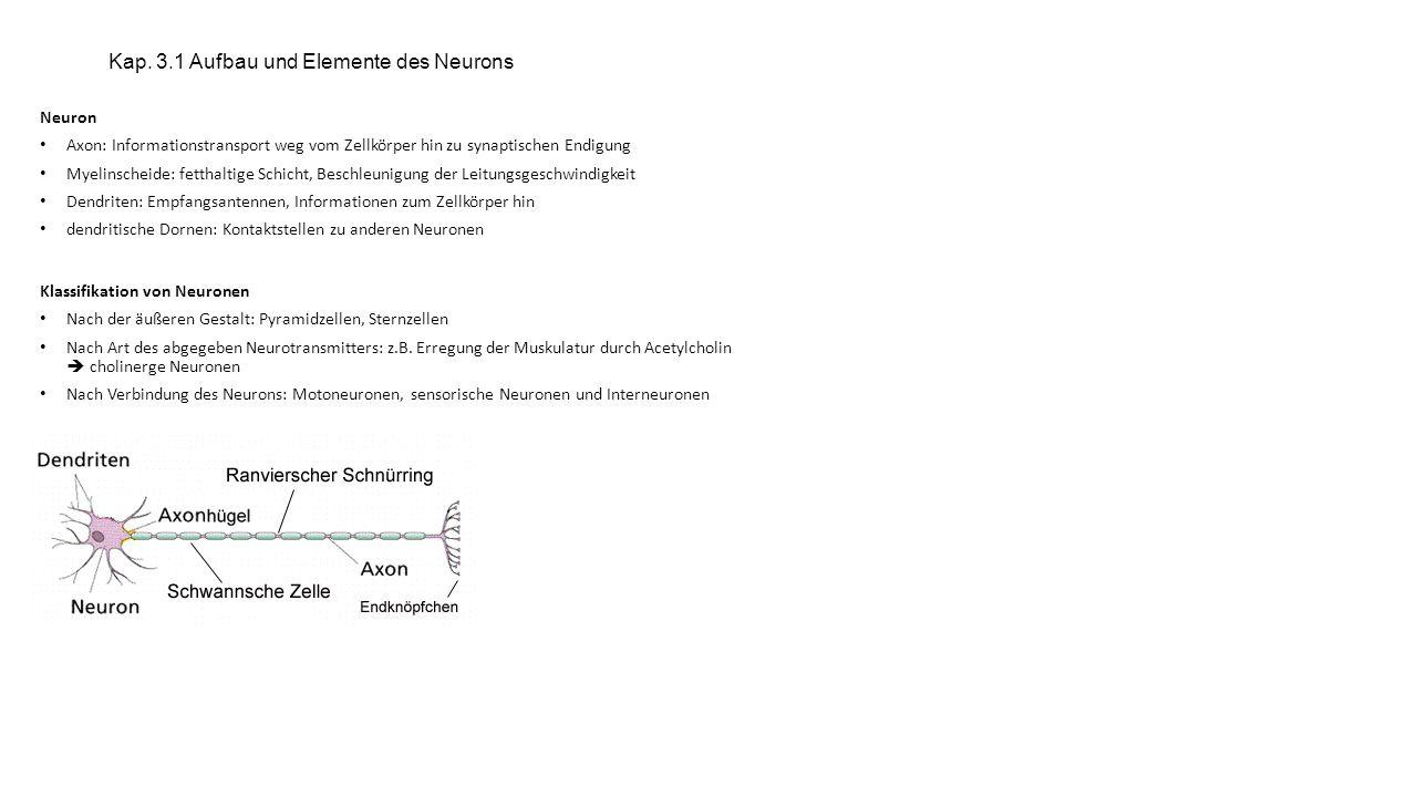 Kap. 3.1 Aufbau und Elemente des Neurons
