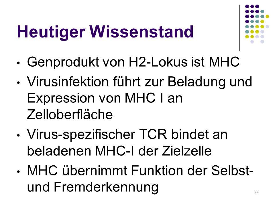 Heutiger Wissenstand Genprodukt von H2-Lokus ist MHC