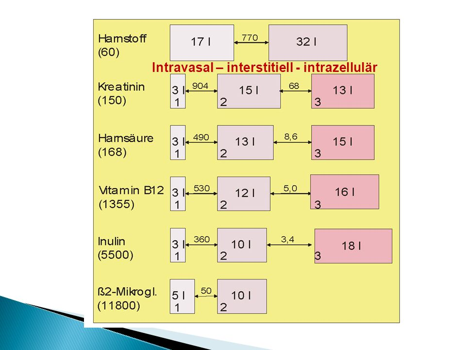 Intravasal – interstitiell - intrazellulär
