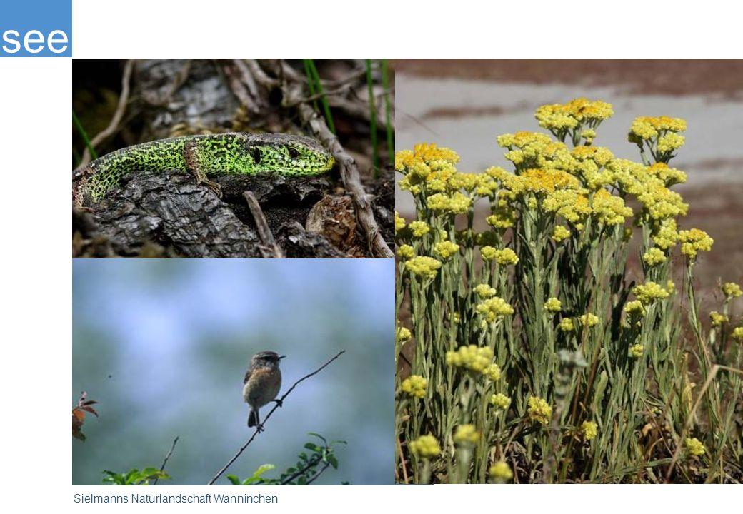 Selten gewordene Tiere und Pflanzen siedeln sich in diesem ungewöhnlichen Lebensraum an. Die Stiftung des engagierten Tierfilmers Heinz Sielmann sichert den Erhalt und die Erlebbarkeit der Naturschönheiten. Gleichzeitig wird ein naturorientierter Tourismus entwickelt.
