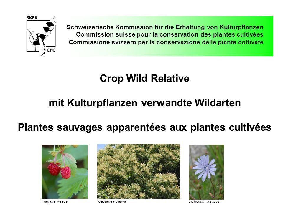 mit Kulturpflanzen verwandte Wildarten