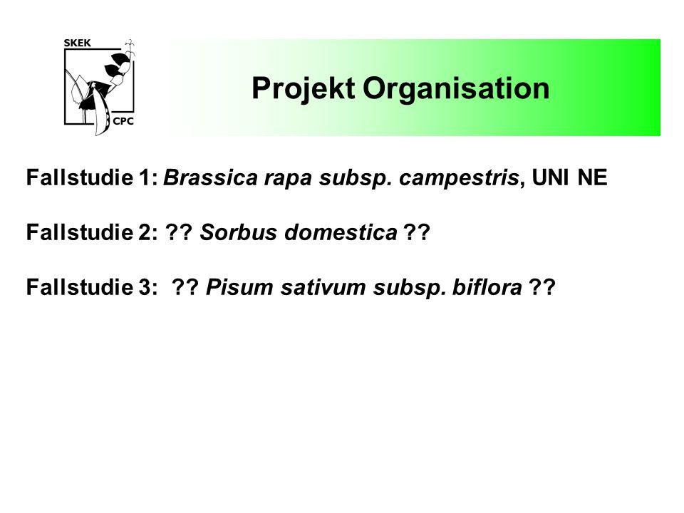 Projekt Organisation Fallstudie 1: Brassica rapa subsp. campestris, UNI NE. Fallstudie 2: Sorbus domestica