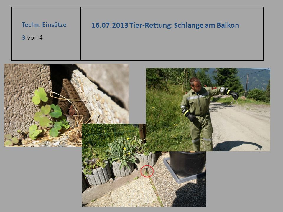 16.07.2013 Tier-Rettung: Schlange am Balkon