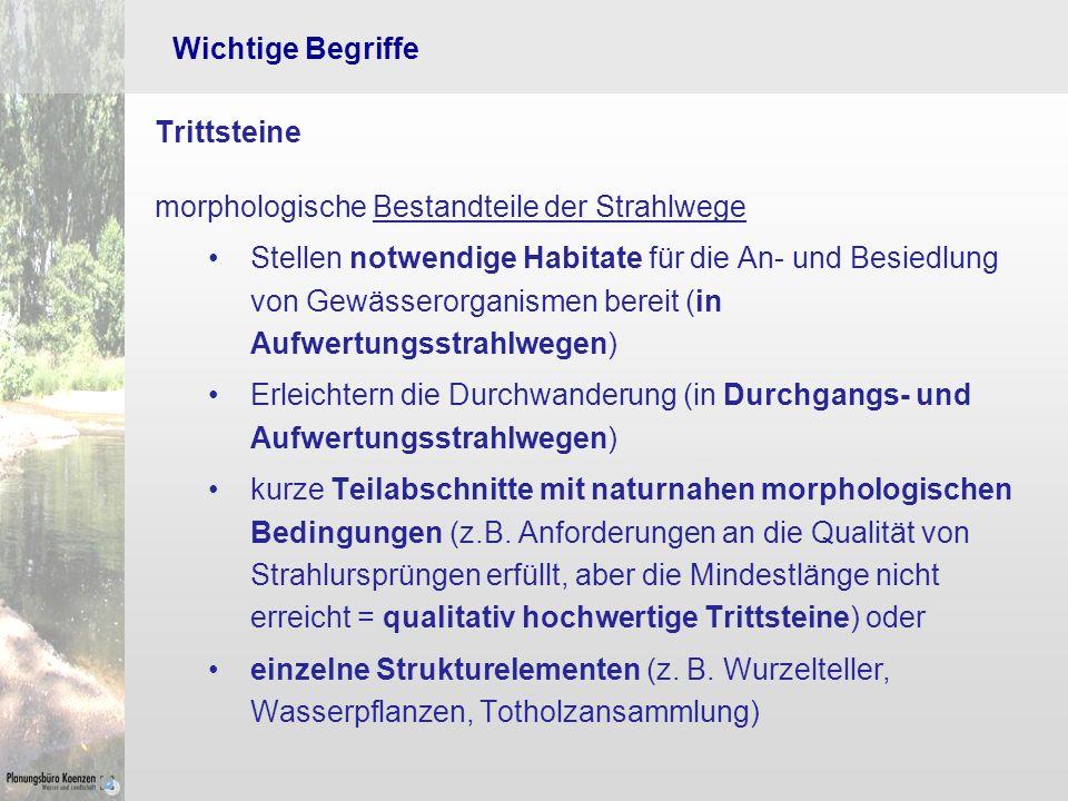 Wichtige Begriffe Trittsteine. morphologische Bestandteile der Strahlwege.