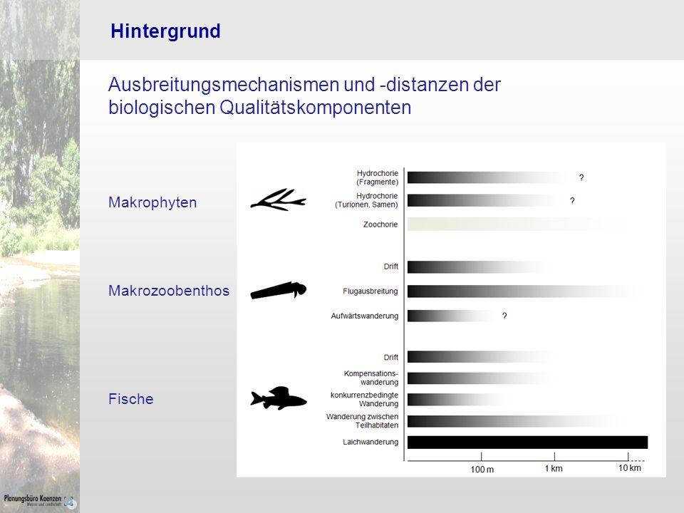 Hintergrund Ausbreitungsmechanismen und -distanzen der biologischen Qualitätskomponenten. Makrophyten.