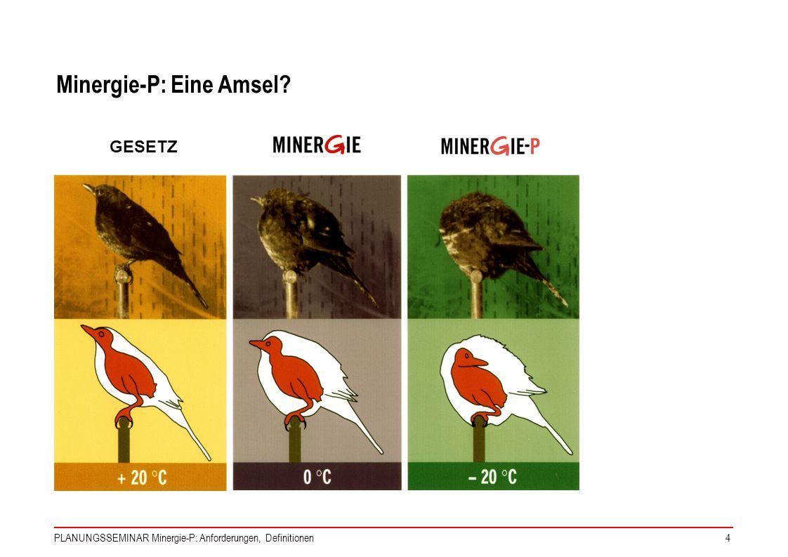 Minergie-P: Eine Amsel