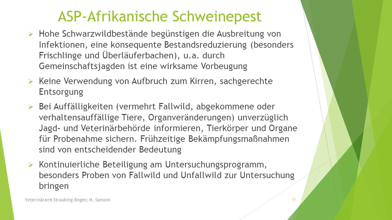 ASP-Afrikanische Schweinepest