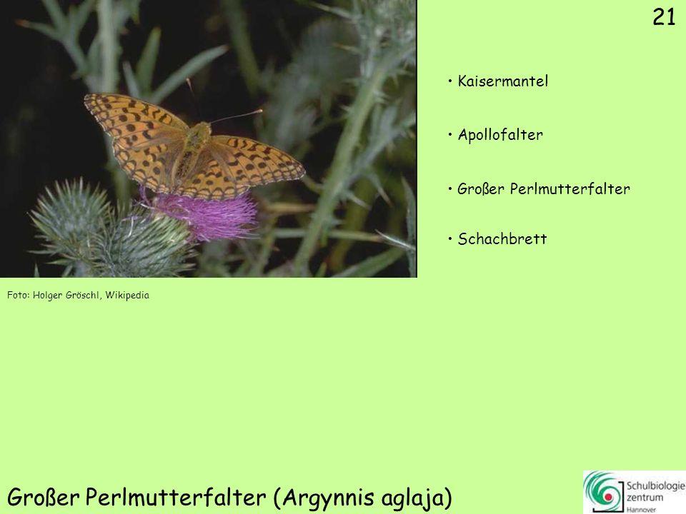Sumpfwiesen-Perlmutterfalter (Boloria selene)