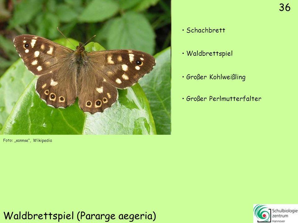 Schornsteinfeger/Brauner Waldvogel (Aphantopus hyperantus)