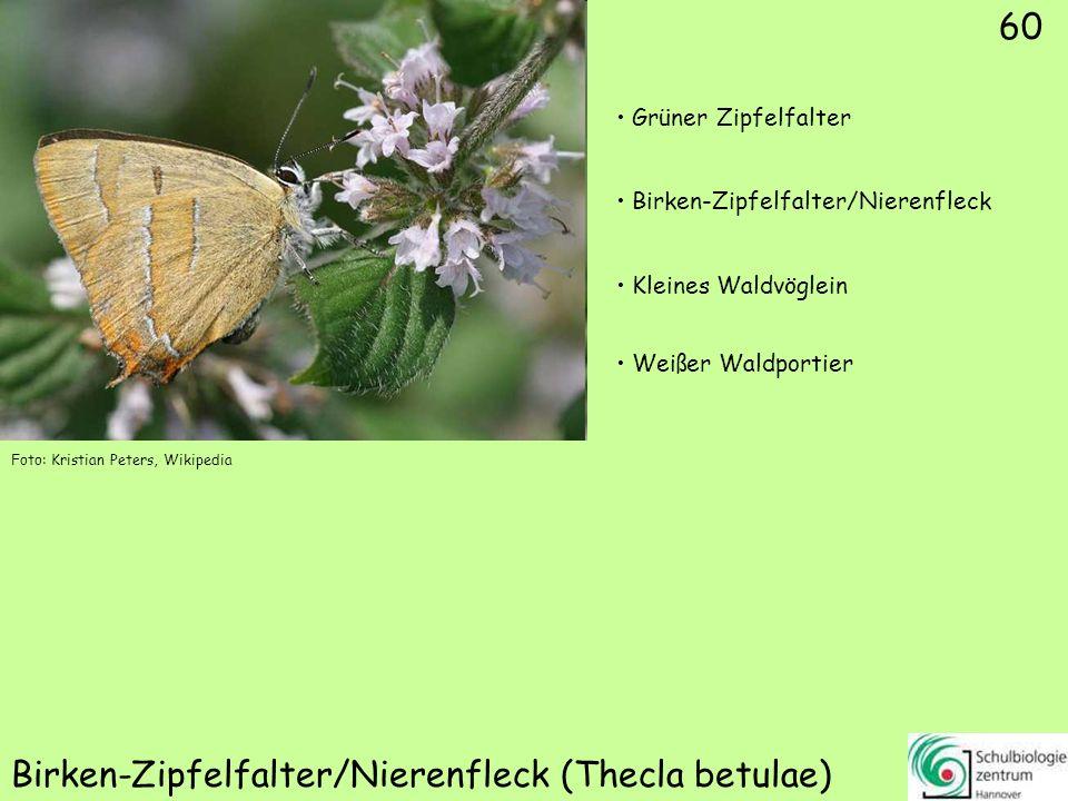 Rostfarbener Dickkopffalter (Ochlodes sylvanus)