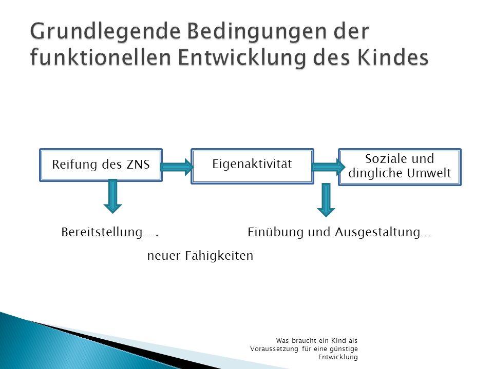 Grundlegende Bedingungen der funktionellen Entwicklung des Kindes