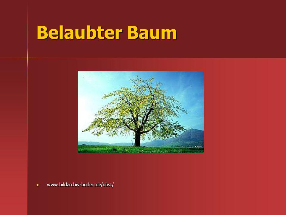 Belaubter Baum www.bildarchiv-boden.de/obst/