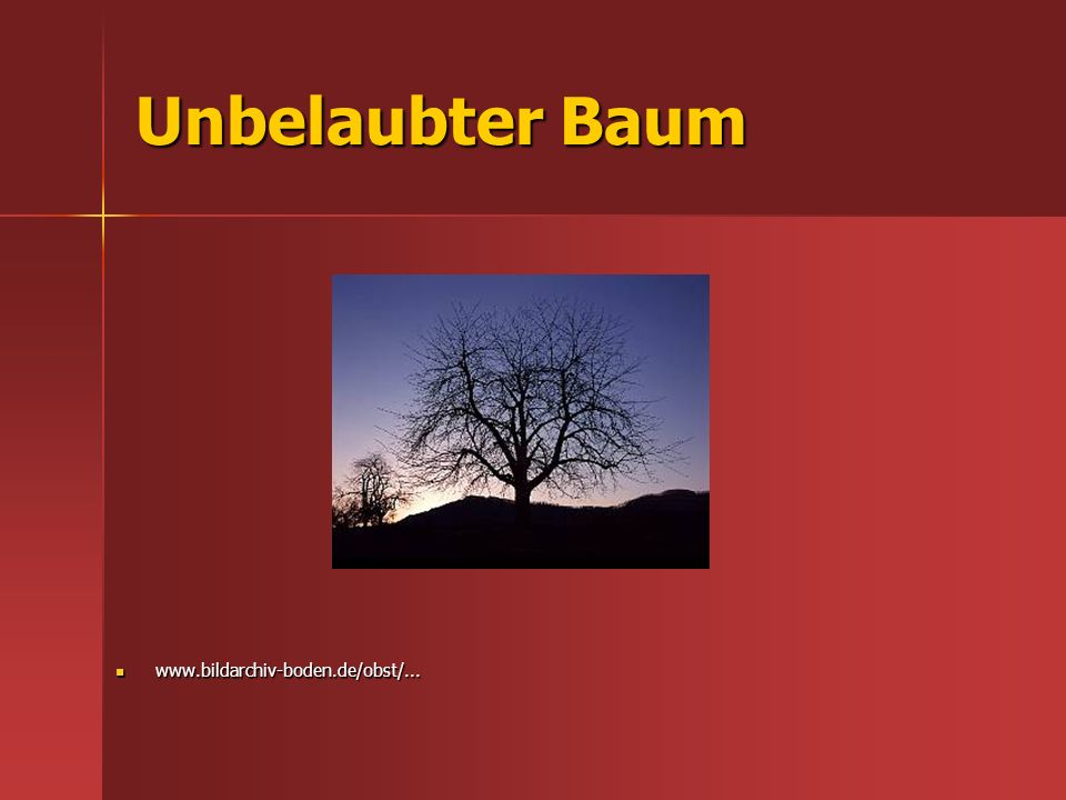 Unbelaubter Baum www.bildarchiv-boden.de/obst/...