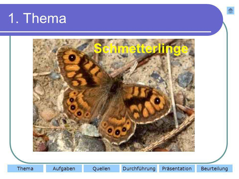 1. Thema Schmetterlinge