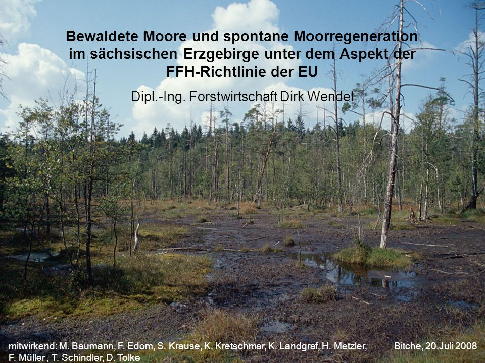 Bewaldete Moore und spontane Moorregeneration