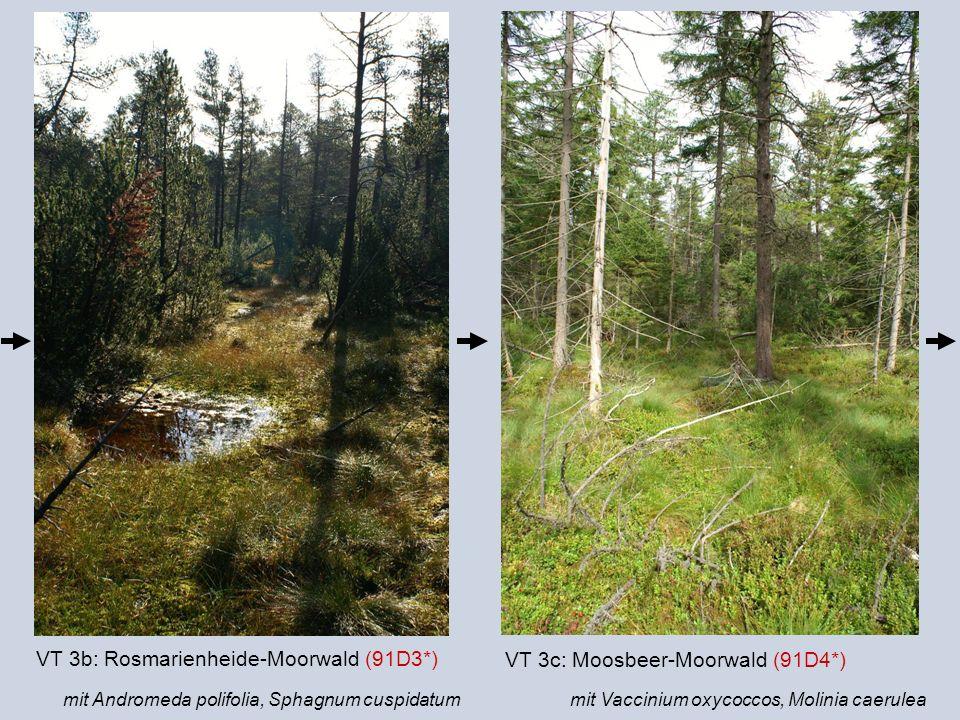 VT 3b: Rosmarienheide-Moorwald (91D3*)