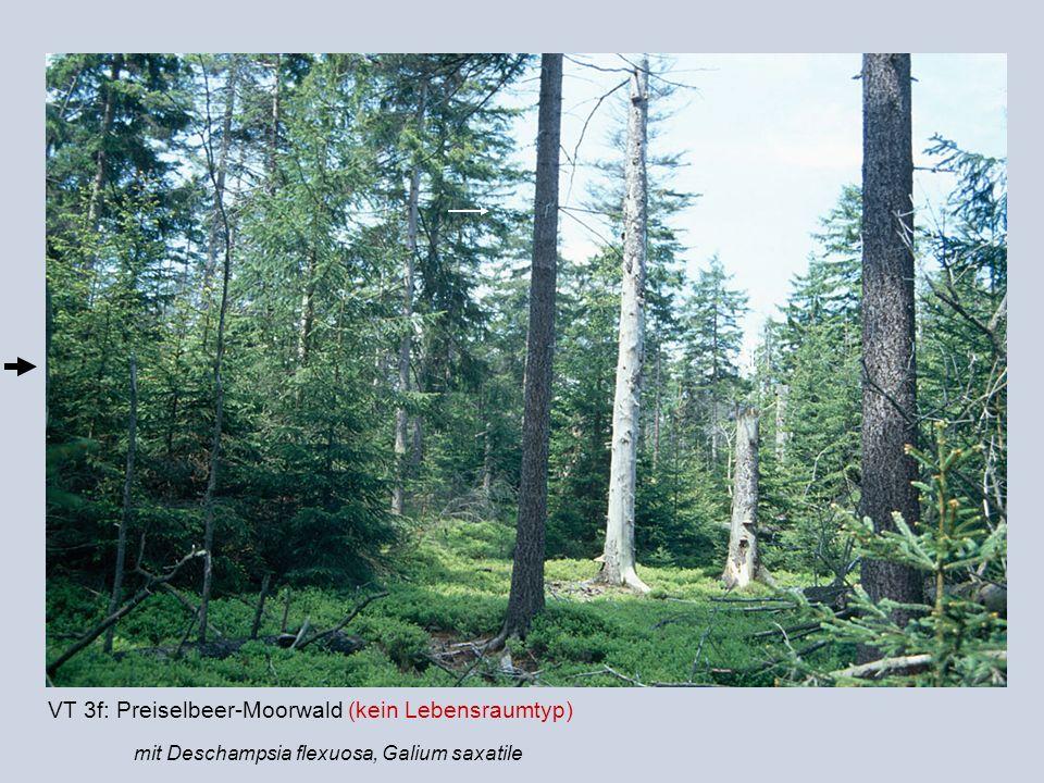 VT 3f: Preiselbeer-Moorwald (kein Lebensraumtyp)