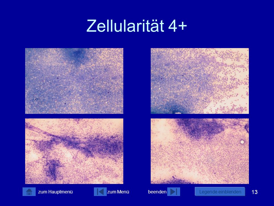 Zellularität 4+
