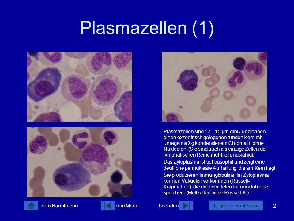 Plasmazellen (1)