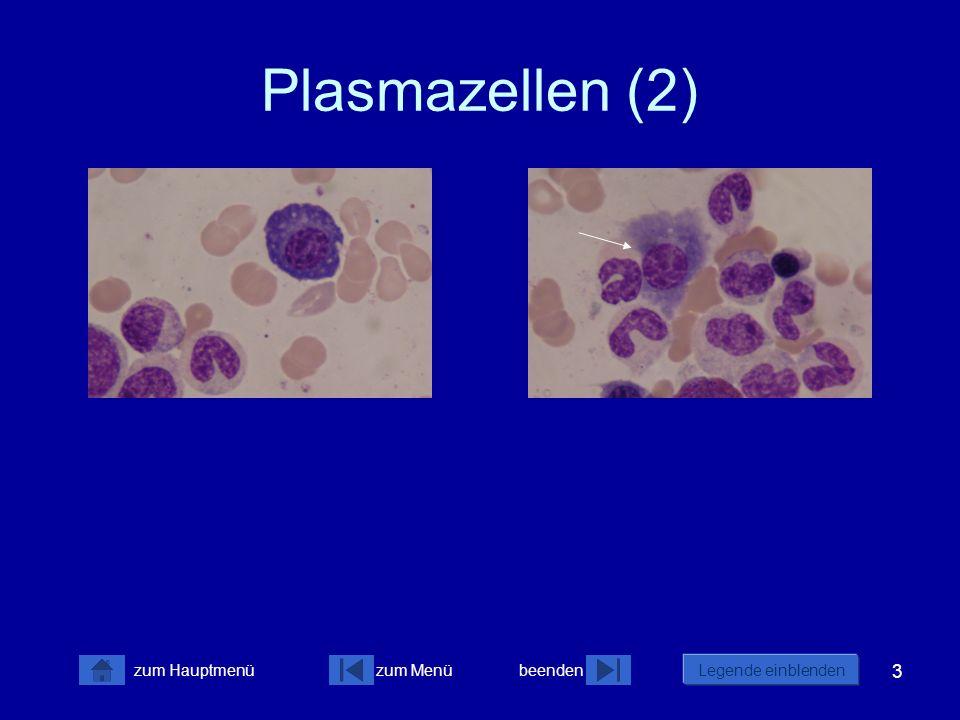 Plasmazellen (2)