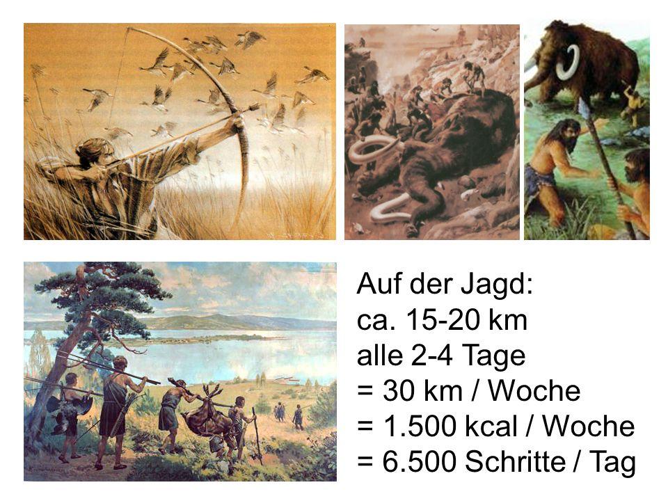 Auf der Jagd: ca. 15-20 km alle 2-4 Tage = 30 km / Woche = 1