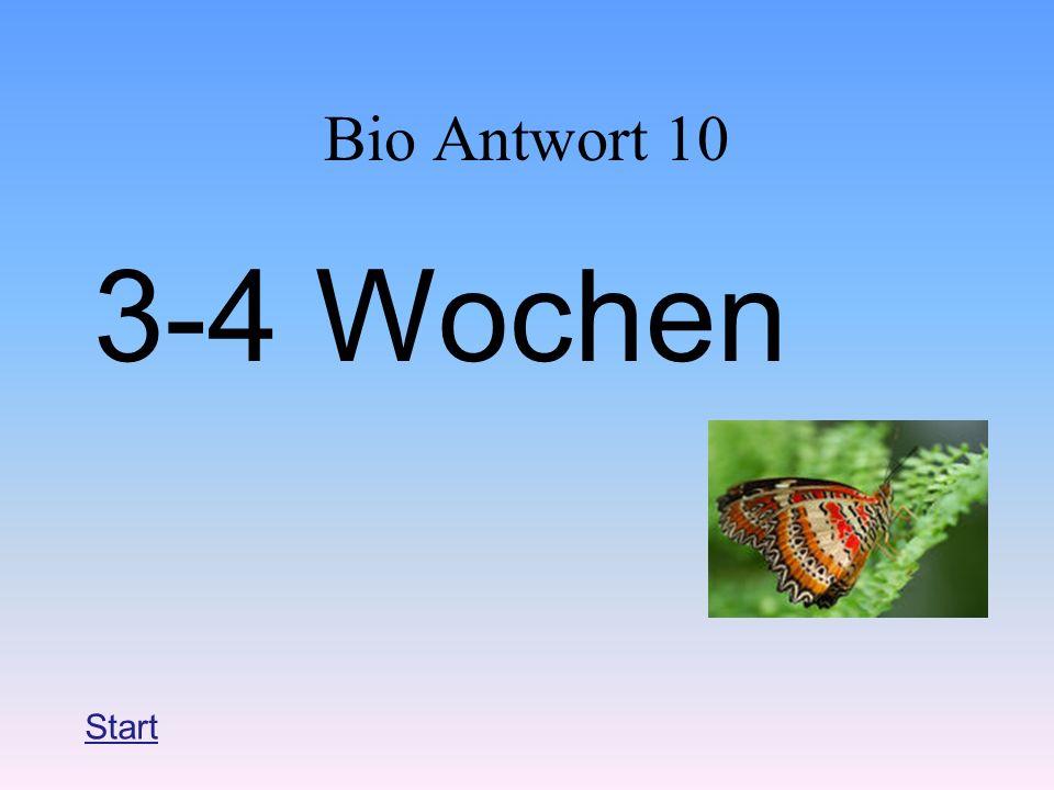 Bio Antwort 10 3-4 Wochen Start