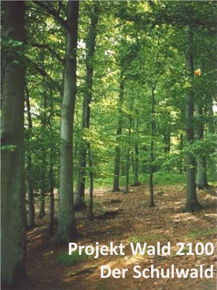 """Frage 6: Würdest du einen eigenen """"Schul-Wald für den Unterricht oder die Pausen gut finden"""