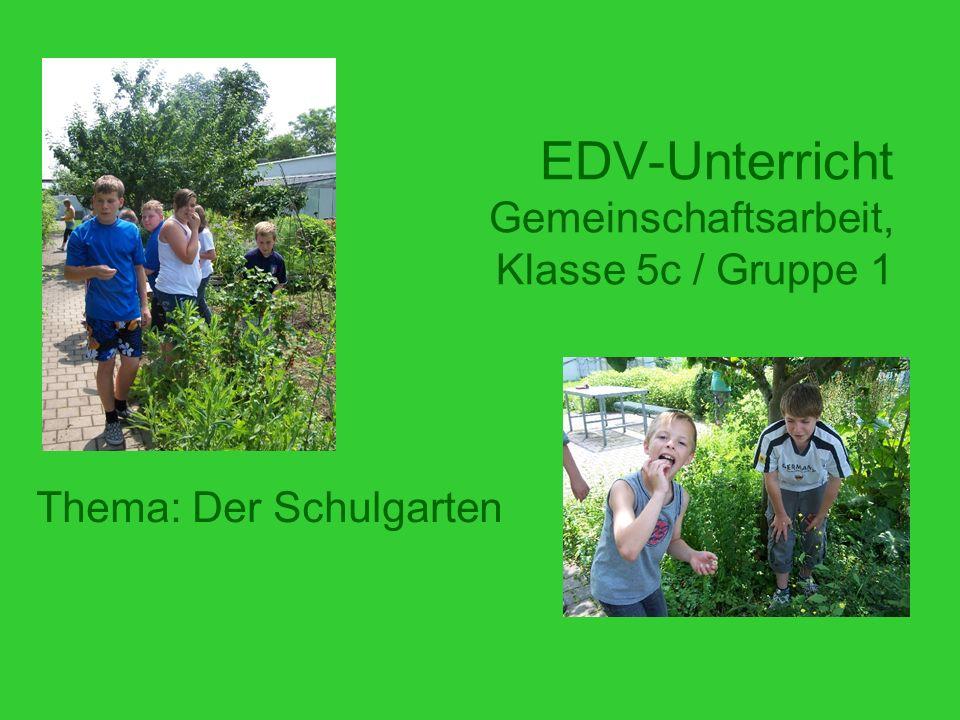 EDV-Unterricht Gemeinschaftsarbeit, Klasse 5c / Gruppe 1