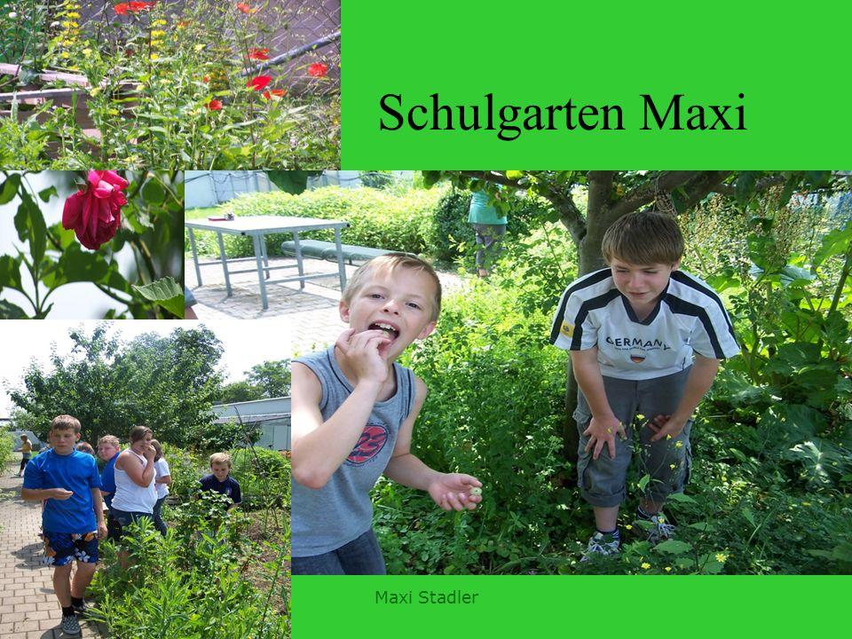 Schulgarten Maxi Maxi Stadler