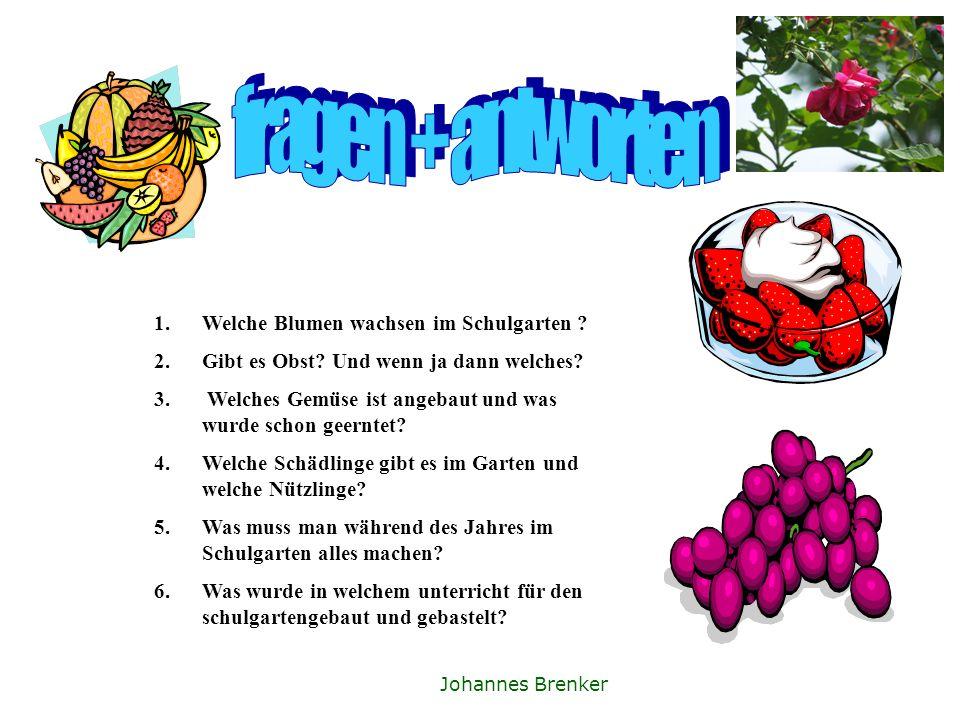 fragen + antworten Welche Blumen wachsen im Schulgarten