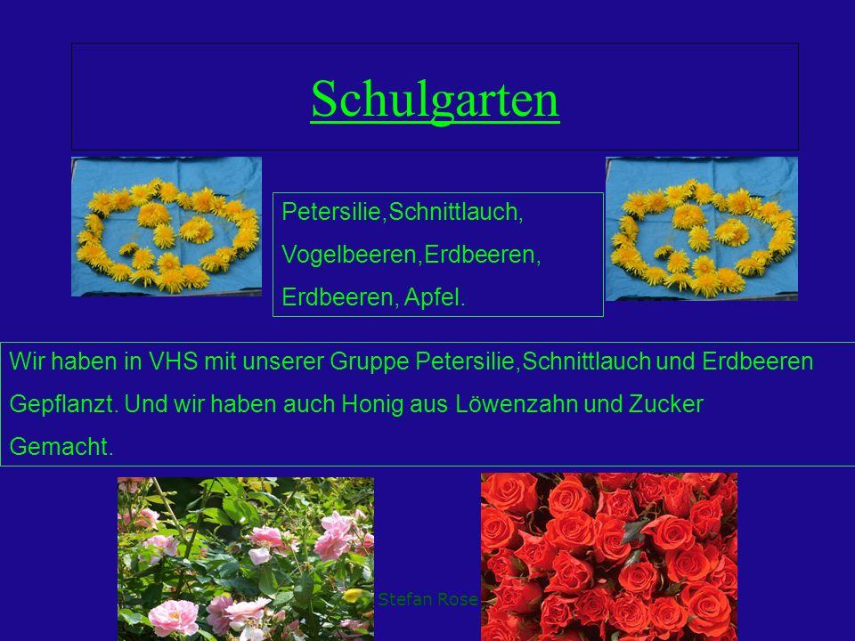 Schulgarten Petersilie,Schnittlauch, Vogelbeeren,Erdbeeren,