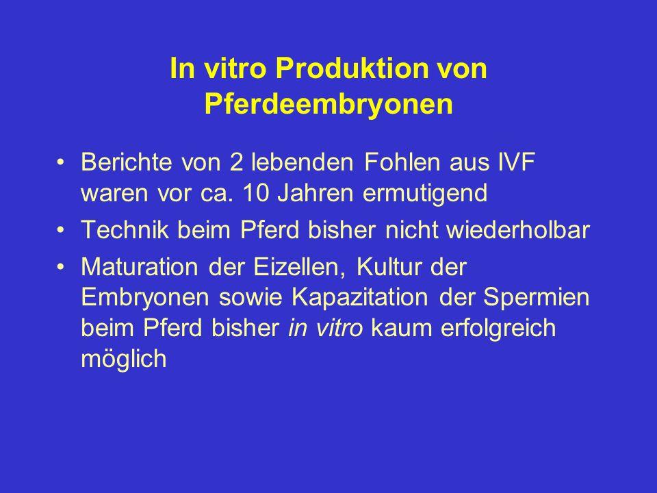 In vitro Produktion von Pferdeembryonen