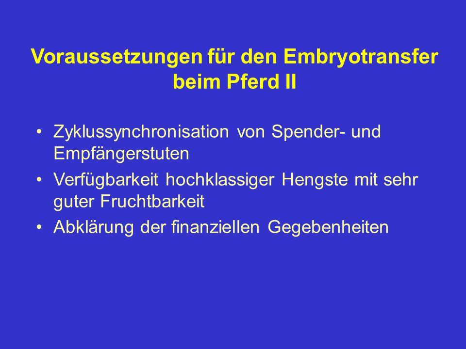 Voraussetzungen für den Embryotransfer beim Pferd II