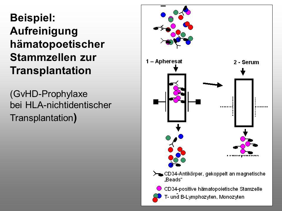Aufreinigung hämatopoetischer Stammzellen zur Transplantation