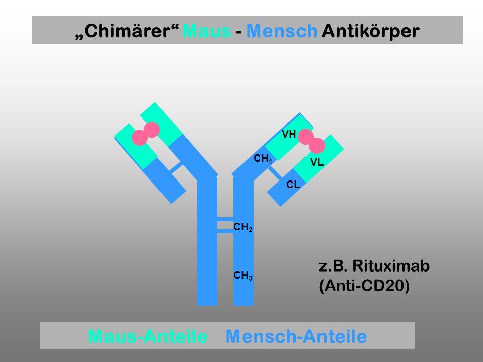 """""""Chimärer Maus - Mensch Antikörper Maus-Anteile Mensch-Anteile"""