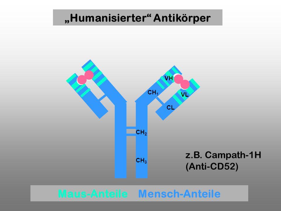 """""""Humanisierter Antikörper Maus-Anteile Mensch-Anteile"""