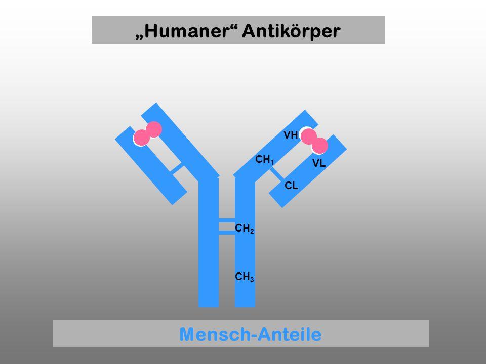 """Humaner Antikörper Mensch-Anteile"