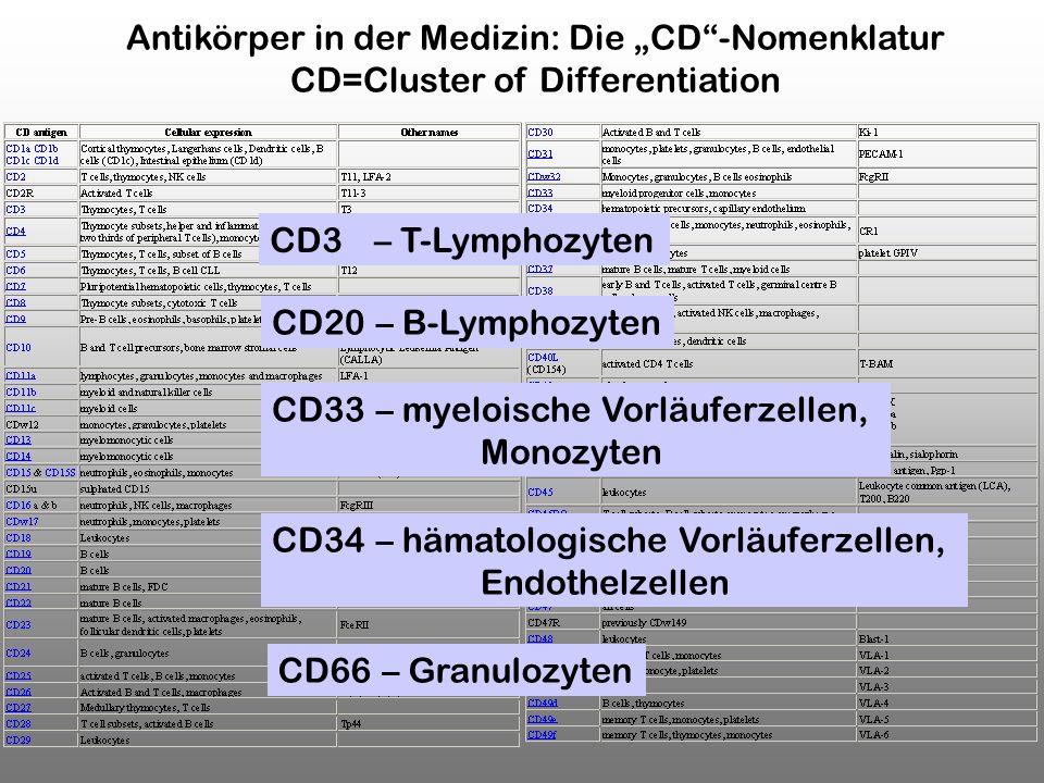 "Antikörper in der Medizin: Die ""CD -Nomenklatur"