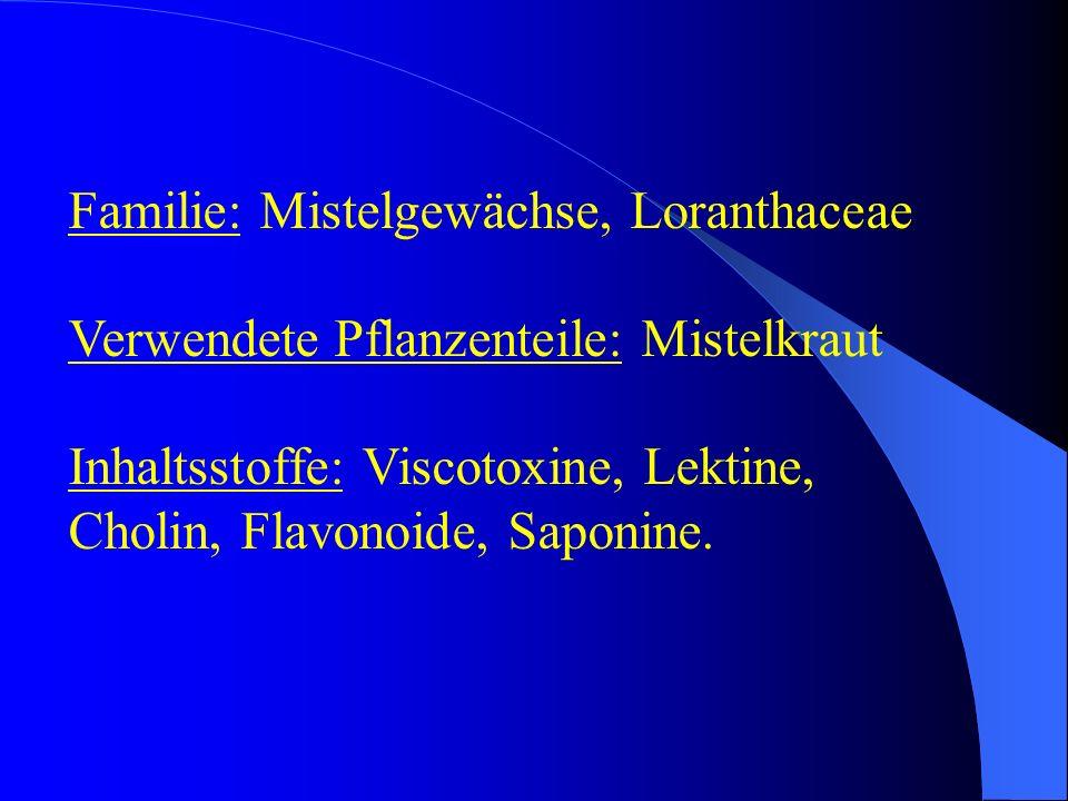 Familie: Mistelgewächse, Loranthaceae