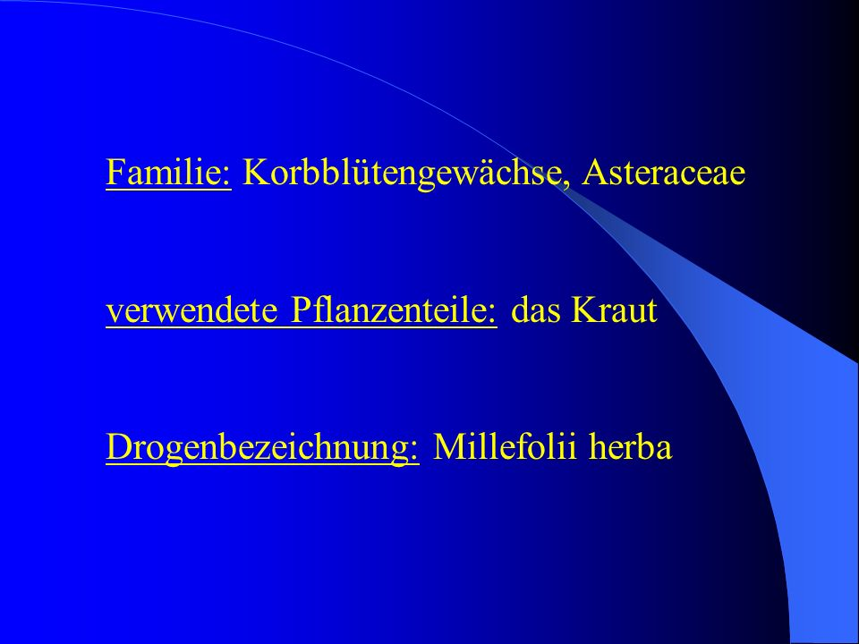 Familie: Korbblütengewächse, Asteraceae