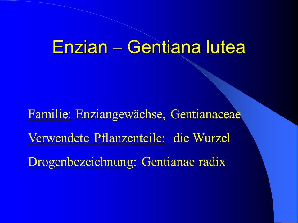 Enzian – Gentiana lutea