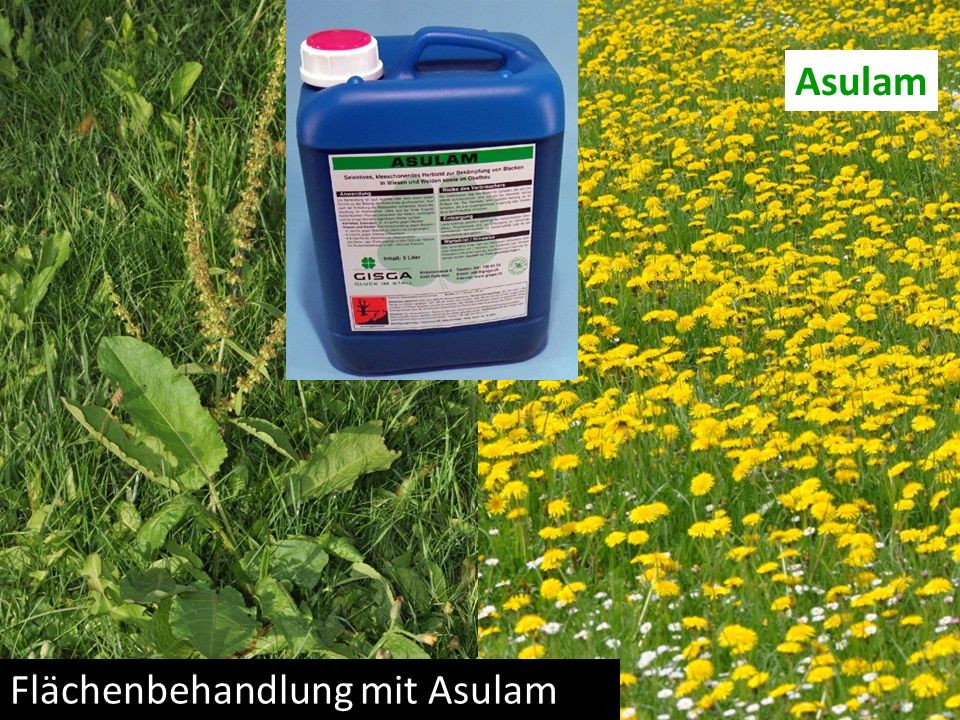 Asulam Flächenbehandlung mit Asulam