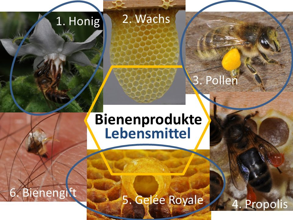 Bienenprodukte Lebensmittel 2. Wachs 1. Honig 3. Pollen 6. Bienengift